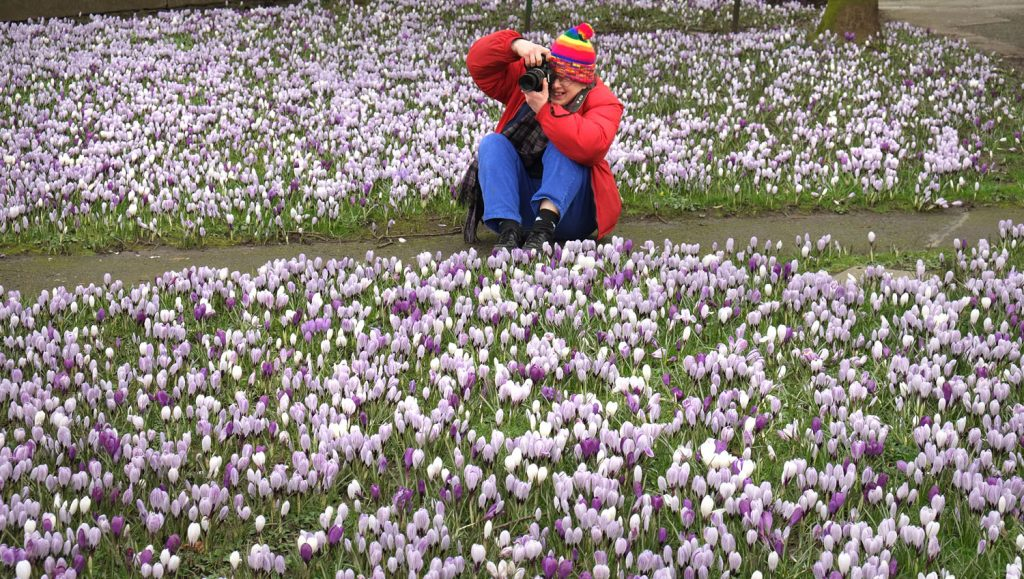 photography student in brightly coloured clothes sits among a sea of crocuses to take a picture