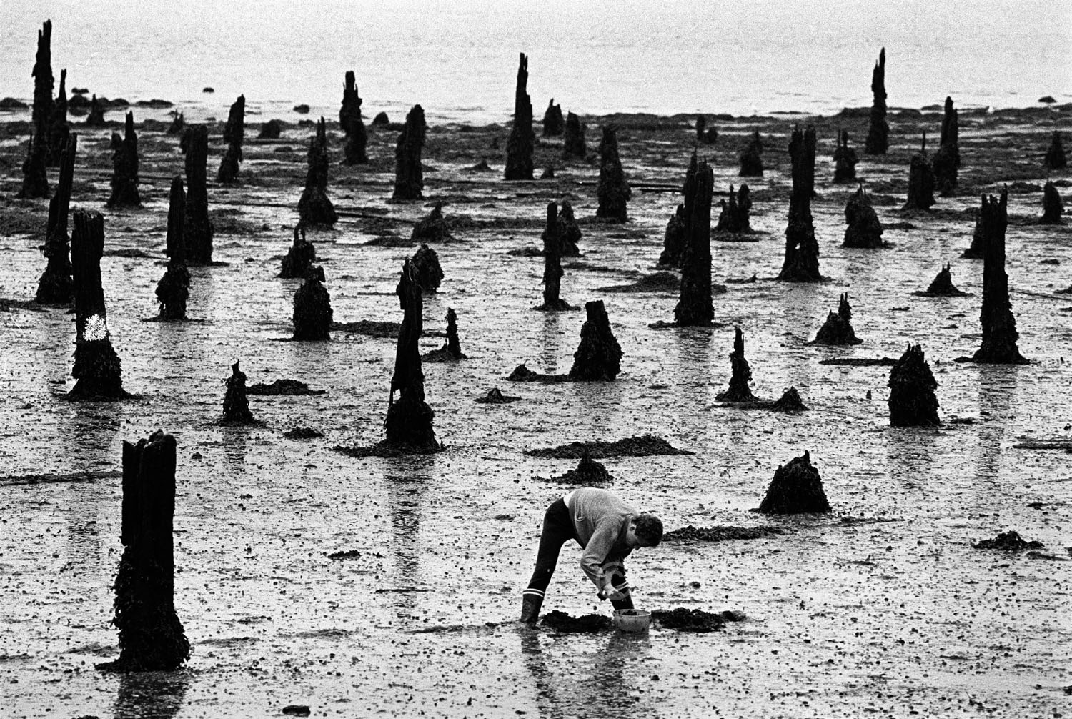 fisherman collects bait on Brittany beach. monochrome picture