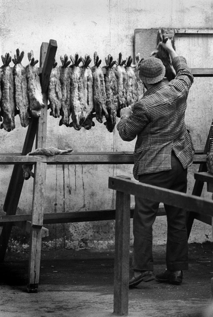 Farmers' market - a man in deerstalker hat hangs dead rabbits on a rack