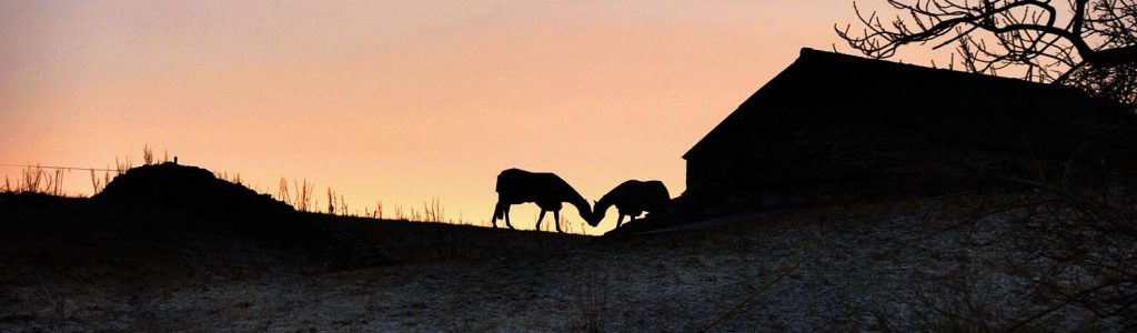 Understanding light - silhouette image of two horses appearing to kiss in the sunset