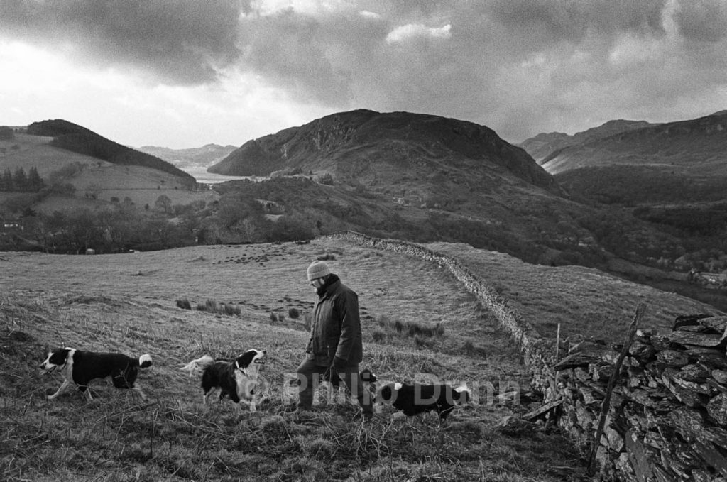 Man in woollen hat walks dogs, Snowdonia, Wales
