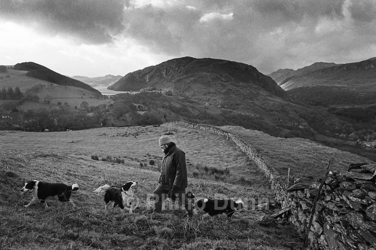 Man in woollen hat walks dogs, Snowdonia, Wales