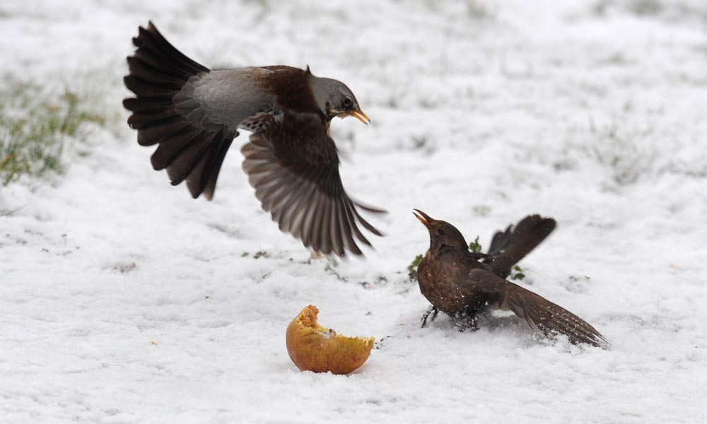 wildlife photography-bird photography