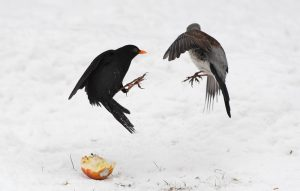 Photographing Birds in the Snow