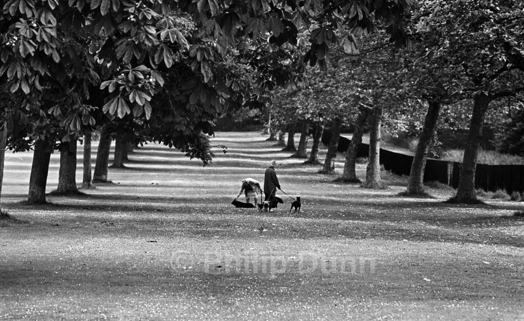 telephoto lens to foreshorten the perspective of this shot of Windsor Great Park dog walkers