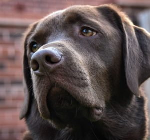photography lessons Doug the dog